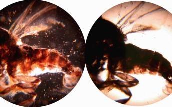 holografisch-beeld-van-microscoop