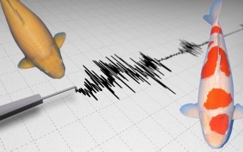aardbevingen koi vijver schade