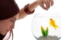 Japans stel dwingt dochter tot eten goudvissen