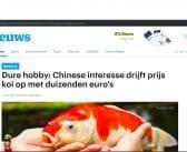 Koihobby in het landelijke nieuws