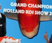 Grand Champion HKS 2019: Yamatoya en Tjaard weer goed voor goud