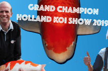 Grand Champion Holland Koi SHow 2019
