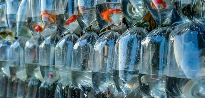 Amsterdam treft cocaïne aan in transportzakken van tropische vissen